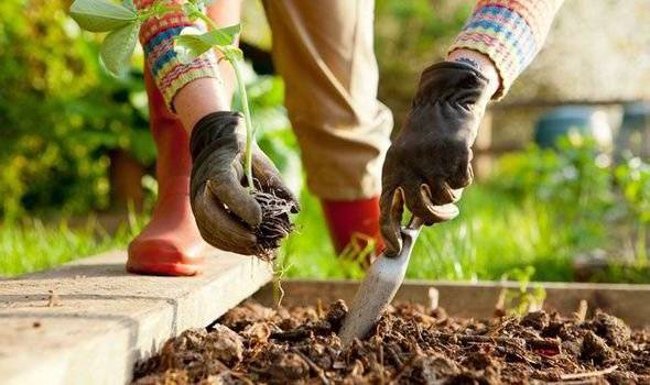 Planting in garden